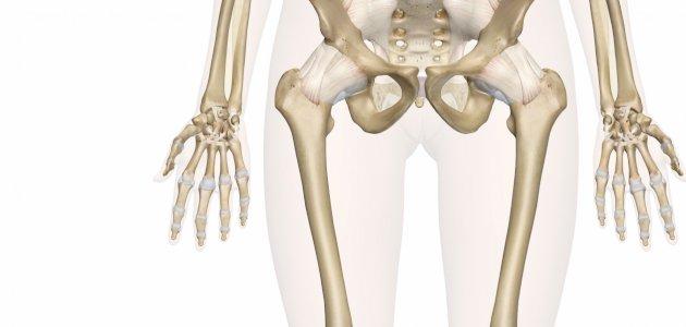 أقوى عظام جسم الإنسان موقعها وسبب قوتها سطور
