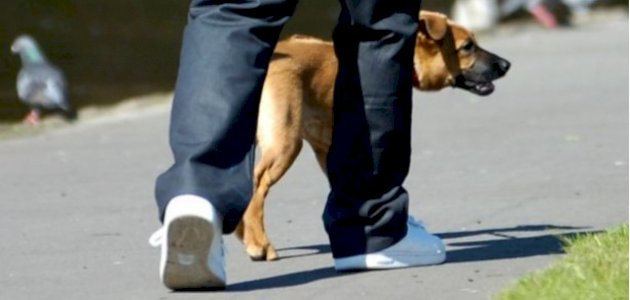 مقارنة للنشاط البدني بين الإنسان والحيوان
