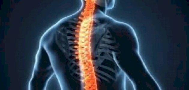 النخاع الشوكي: التعريف، الموقع، المكونات، الوظائف، الأمراض الشائعة