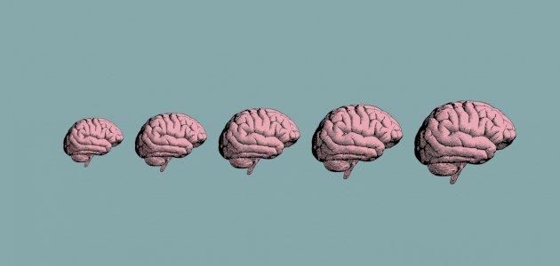 نظرية العلاج الجشطالتي