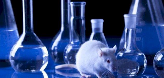 هل يجب استخدام الحيوانات في البحث