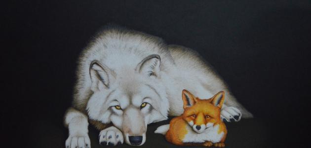 الفرق بين الذئب والثعلب