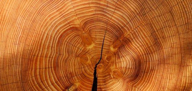 أفضل أنواع الخشب للدواليب: إليك أهم النصائح من الخبراء
