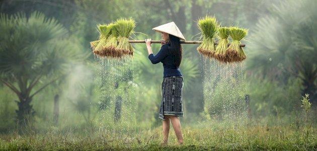 أنواع الأرز: أهم الفوائد وأين تزرع؟ وكيف تطبخ؟ وأين تباع؟
