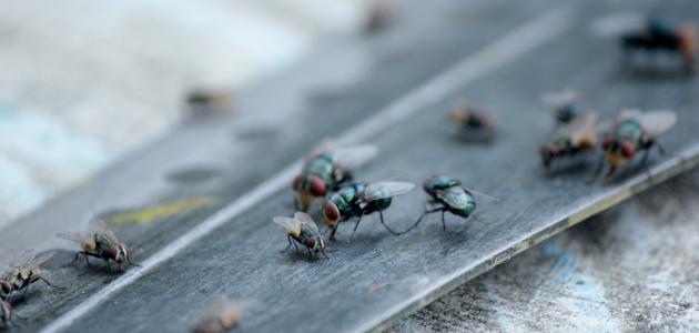 الأمراض التي يسببها الذباب